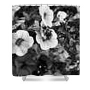 Bee And Flowers, Bw Shower Curtain