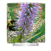 Bee And Its Lavender Delight Shower Curtain