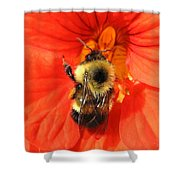 Bee And Nasturtium Shower Curtain