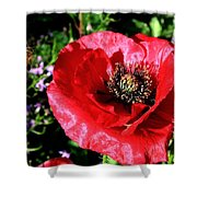 Bee And Red Poppy Shower Curtain