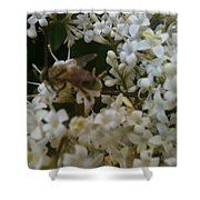 Bee And Small White Blossoms 2 Shower Curtain