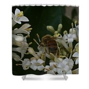 Bee And Small White Blossoms Shower Curtain