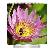 Bee And The Lily Shower Curtain