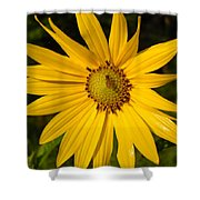 Bee And Yellow Flower Shower Curtain