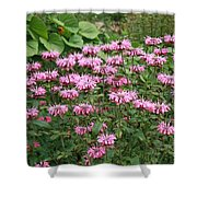 Bee Balm Garden Shower Curtain