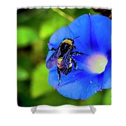 Bee Covered With Pollen On Morning Glory 3521t Shower Curtain