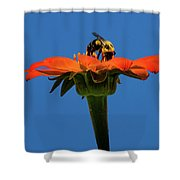Bee Dreamsicle Shower Curtain