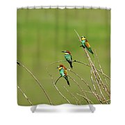 Bee Eaters In The Sun Shower Curtain
