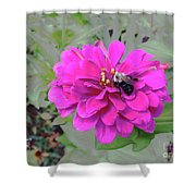 Bee Feeding From Pink Zinnia Shower Curtain