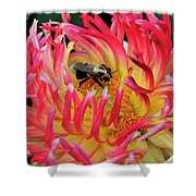 Bee In Dahlia Shower Curtain
