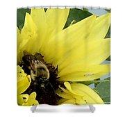 Bee In Sunflower Shower Curtain
