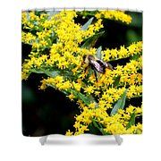 Bee In The Rawweed Shower Curtain