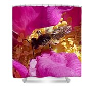 Bee In The Rugosa Shower Curtain