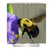 Bee Landing On Spiderwort Flower Shower Curtain