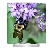 Bee-lieve Shower Curtain