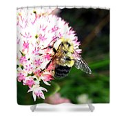 Bee-line 2 Shower Curtain