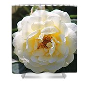 Bee My Rose Shower Curtain