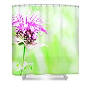 Bee Nectar Shower Curtain