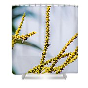 Bee On A Branch I Shower Curtain
