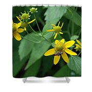 Bee On A Flower Shower Curtain
