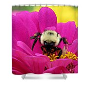 Bee On A Hot Pink Zinnia Shower Curtain