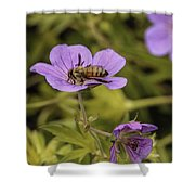 Bee On A Purple Flower Shower Curtain