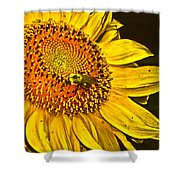 Bee On A Sunflower Shower Curtain