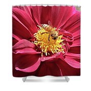 Bee On Beautiful Dahlia Shower Curtain