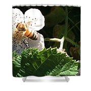 Bee On Blackberry Blossom Shower Curtain