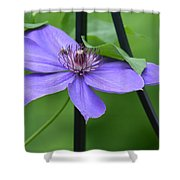 Bee On Bloom Shower Curtain