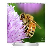 Bee On Chive Flower Shower Curtain by Ann E Robson