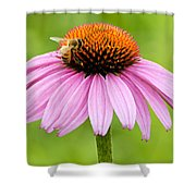 Bee On Cone Flower Shower Curtain