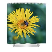 Bee On Curlyhead Goldenweed Shower Curtain