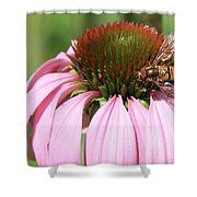 Bee On Echinacea Shower Curtain
