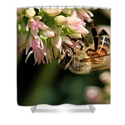 Bee On Flower 1 Shower Curtain