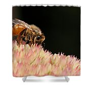 Bee On Flower 2 Shower Curtain