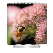 Bee On Flower 3 Shower Curtain