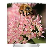 Bee On Flower 4 Shower Curtain