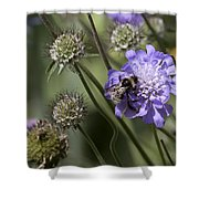 Bee On Flower 4. Shower Curtain