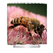 Bee On Flower 6 Shower Curtain