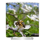 Bee On Flower On Tree Branch Shower Curtain