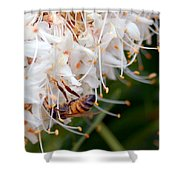 Bee On Flowers 1 Shower Curtain