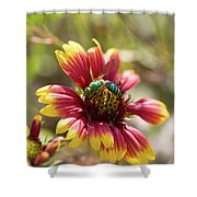 Bee On Gaillardia Shower Curtain