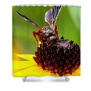 Bee On Lazy Susan 3 Shower Curtain