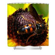 Bee On Lazy Susan 4 Shower Curtain