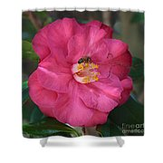 Bee On Pink Camellia Shower Curtain