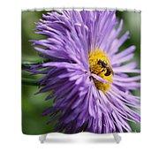 Bee On Purple Daisy Shower Curtain