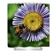 Bee On Purple Petals Shower Curtain