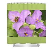 Bee On Purple Spiderwort Shower Curtain