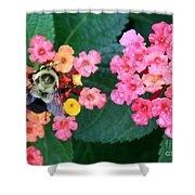 Bee On Rainy Flowers Shower Curtain